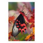 Sammamish, Washington. Tropical Butterflies 3 Photographic Print