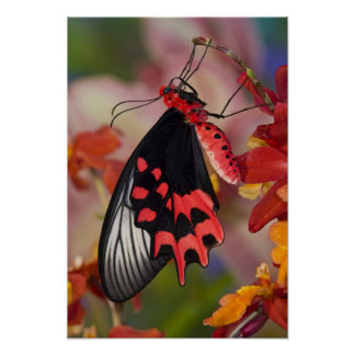 Sammamish, Washington. Tropical Butterflies 3 Poster