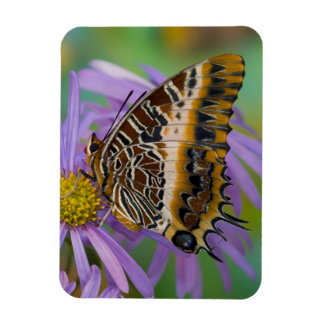 Sammamish Washington Tropical Butterflies 3 Rectangular Photo Magnet