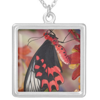 Sammamish, Washington. Tropical Butterflies 3 Square Pendant Necklace