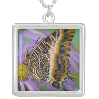 Sammamish Washington Tropical Butterflies 3 Square Pendant Necklace