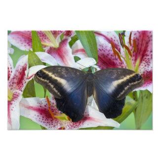 Sammamish, Washington. Tropical Butterflies 40 Photograph