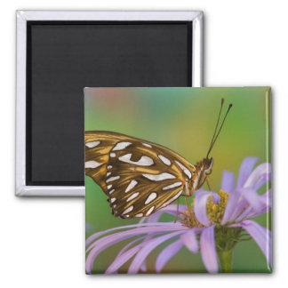 Sammamish, Washington. Tropical Butterflies 40 Square Magnet