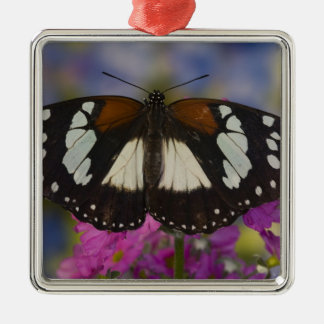 Sammamish, Washington. Tropical Butterflies 41 Christmas Ornament