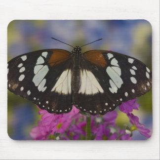 Sammamish, Washington. Tropical Butterflies 41 Mouse Mat