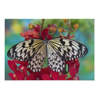 Sammamish, Washington. Tropical Butterflies 41 Photo Print