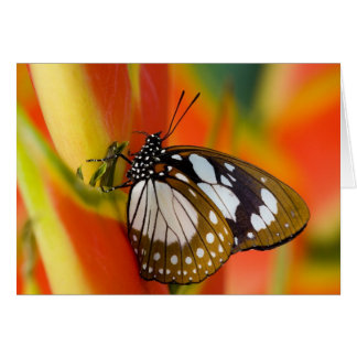 Sammamish, Washington. Tropical Butterflies 42 Card