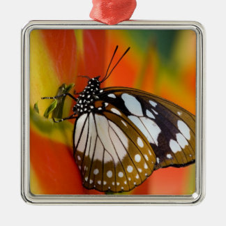 Sammamish, Washington. Tropical Butterflies 42 Christmas Ornament