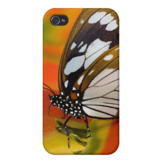 Sammamish, Washington. Tropical Butterflies 42 Covers For iPhone 4