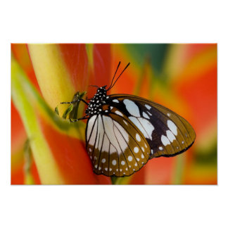 Sammamish, Washington. Tropical Butterflies 42 Poster