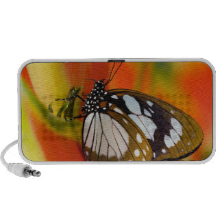 Sammamish, Washington. Tropical Butterflies 42 Portable Speakers