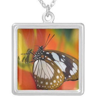 Sammamish, Washington. Tropical Butterflies 42 Square Pendant Necklace