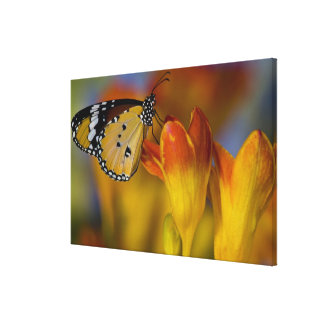 Sammamish, Washington. Tropical Butterflies 43 Canvas Print