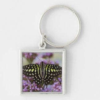 Sammamish, Washington. Tropical Butterflies 43 Key Ring