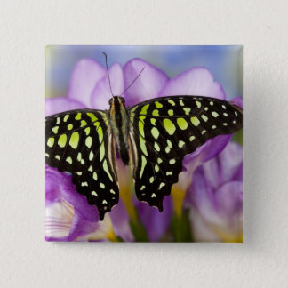 Sammamish, Washington. Tropical Butterflies 44 15 Cm Square Badge