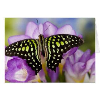 Sammamish, Washington. Tropical Butterflies 44 Card