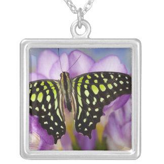 Sammamish, Washington. Tropical Butterflies 44 Square Pendant Necklace