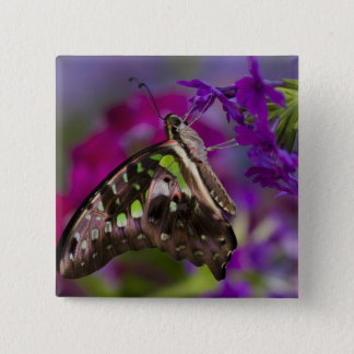 Sammamish, Washington. Tropical Butterflies 45 15 Cm Square Badge