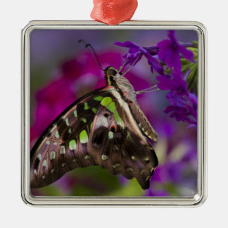 Sammamish, Washington. Tropical Butterflies 45 Christmas Ornament