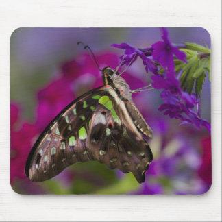 Sammamish, Washington. Tropical Butterflies 45 Mouse Mat