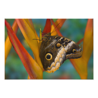 Sammamish, Washington. Tropical Butterflies 45 Photo Print