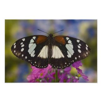 Sammamish, Washington. Tropical Butterflies 45 Photo Print