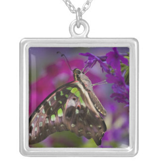 Sammamish, Washington. Tropical Butterflies 45 Silver Plated Necklace