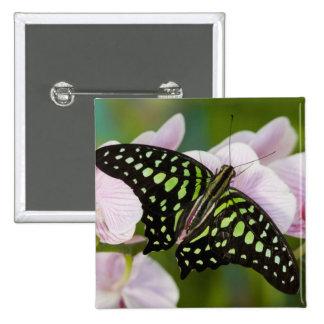 Sammamish, Washington. Tropical Butterflies 46 15 Cm Square Badge