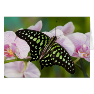 Sammamish, Washington. Tropical Butterflies 46 Card