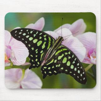 Sammamish, Washington. Tropical Butterflies 46 Mouse Mat