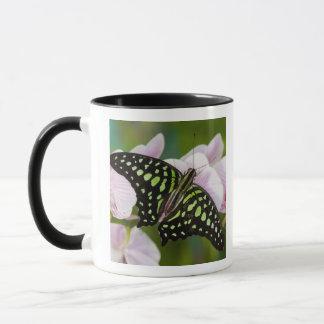 Sammamish, Washington. Tropical Butterflies 46 Mug