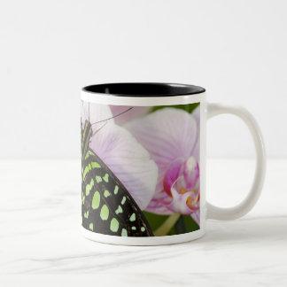 Sammamish, Washington. Tropical Butterflies 46 Two-Tone Coffee Mug