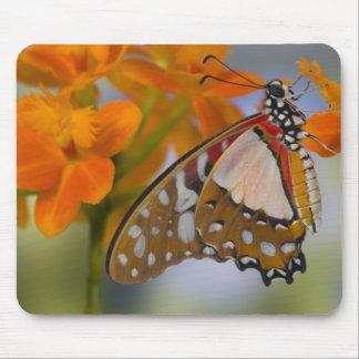 Sammamish, Washington. Tropical Butterflies 47 Mouse Mat