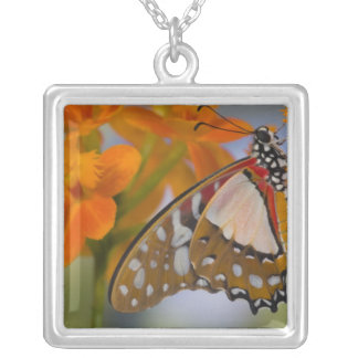 Sammamish, Washington. Tropical Butterflies 47 Square Pendant Necklace