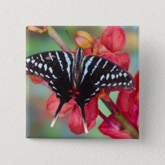 Sammamish, Washington. Tropical Butterflies 48 15 Cm Square Badge
