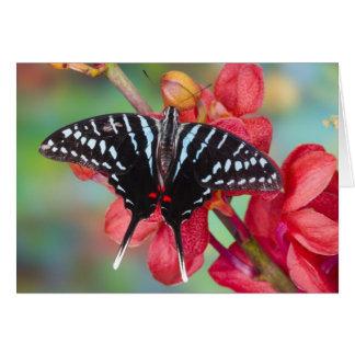 Sammamish, Washington. Tropical Butterflies 48 Card