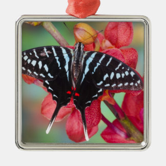Sammamish, Washington. Tropical Butterflies 48 Christmas Ornament