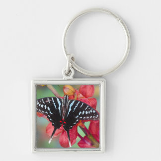 Sammamish, Washington. Tropical Butterflies 48 Key Ring