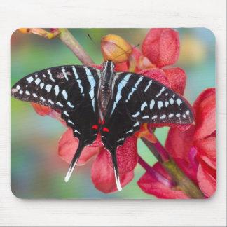 Sammamish, Washington. Tropical Butterflies 48 Mouse Mat