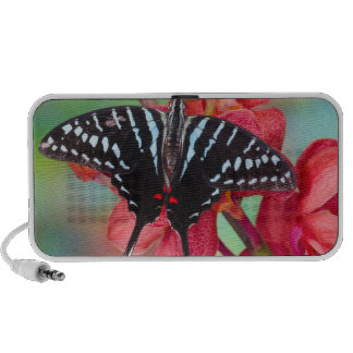 Sammamish, Washington. Tropical Butterflies 48 Mini Speakers