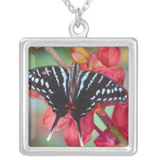 Sammamish, Washington. Tropical Butterflies 48 Square Pendant Necklace