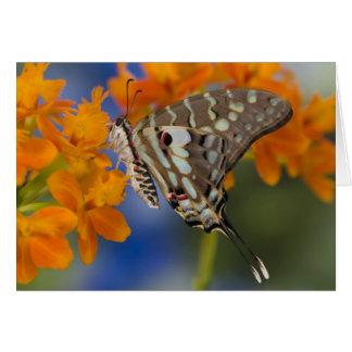 Sammamish, Washington. Tropical Butterflies 49 Card