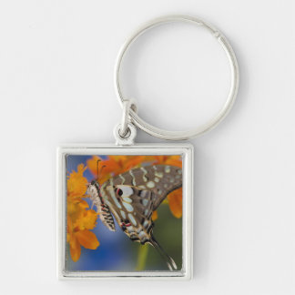 Sammamish, Washington. Tropical Butterflies 49 Key Ring