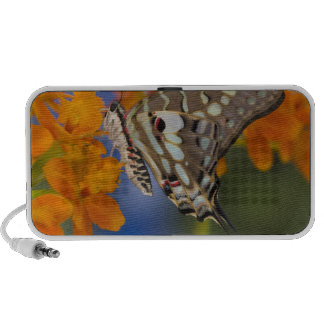 Sammamish, Washington. Tropical Butterflies 49 Mp3 Speaker