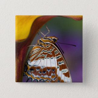Sammamish, Washington. Tropical Butterflies 4 15 Cm Square Badge