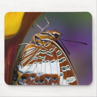 Sammamish, Washington. Tropical Butterflies 4 Mouse Mat