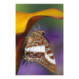 Sammamish, Washington. Tropical Butterflies 4 Photo