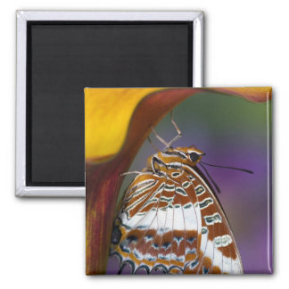 Sammamish, Washington. Tropical Butterflies 4 Square Magnet