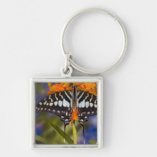 Sammamish, Washington. Tropical Butterflies 50 Key Ring