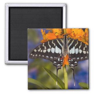 Sammamish, Washington. Tropical Butterflies 50 Magnet